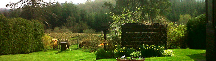 The Cottage has a large garden with highland cows in the field