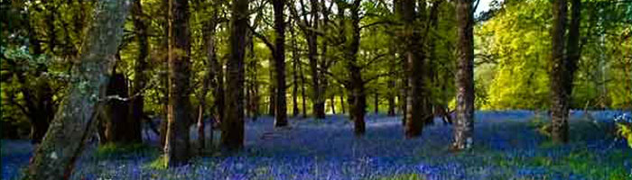 Bluebell woods around Corrie Glen