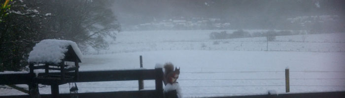 a squirrel sits on the fence on a cold winters day